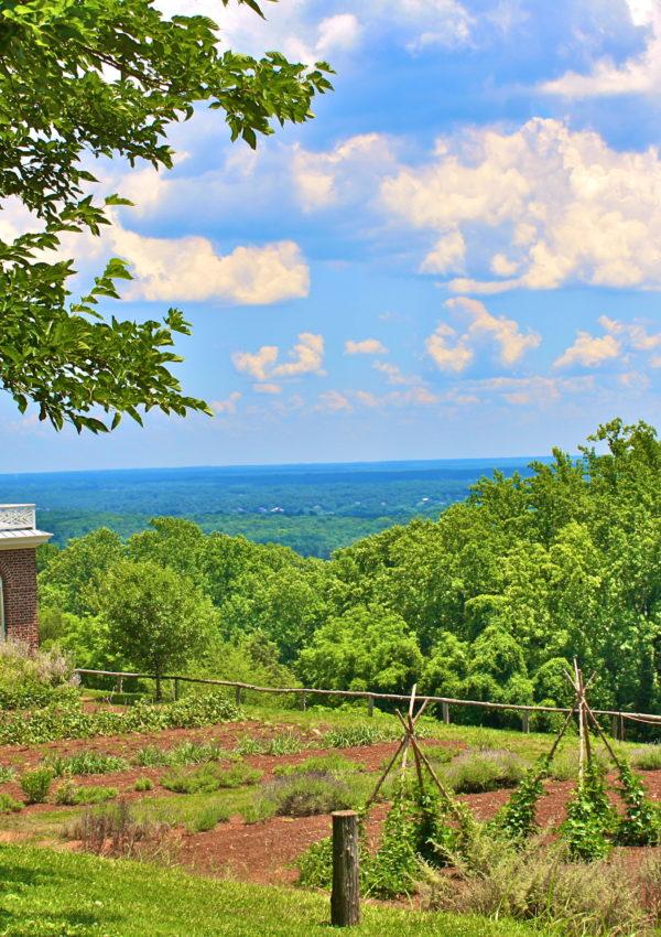 Travel: Charlottesville, Virginia