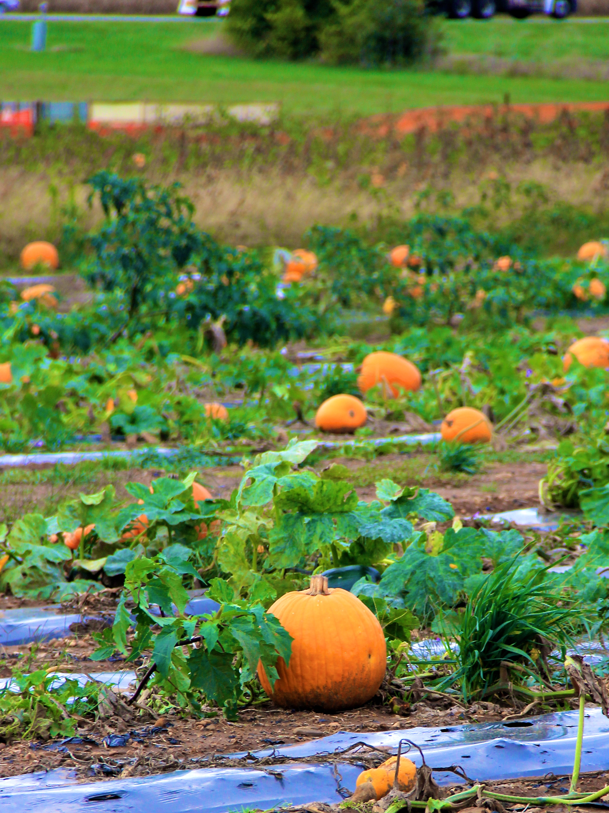 Renick's Pumpkin Patch | girl about columbus