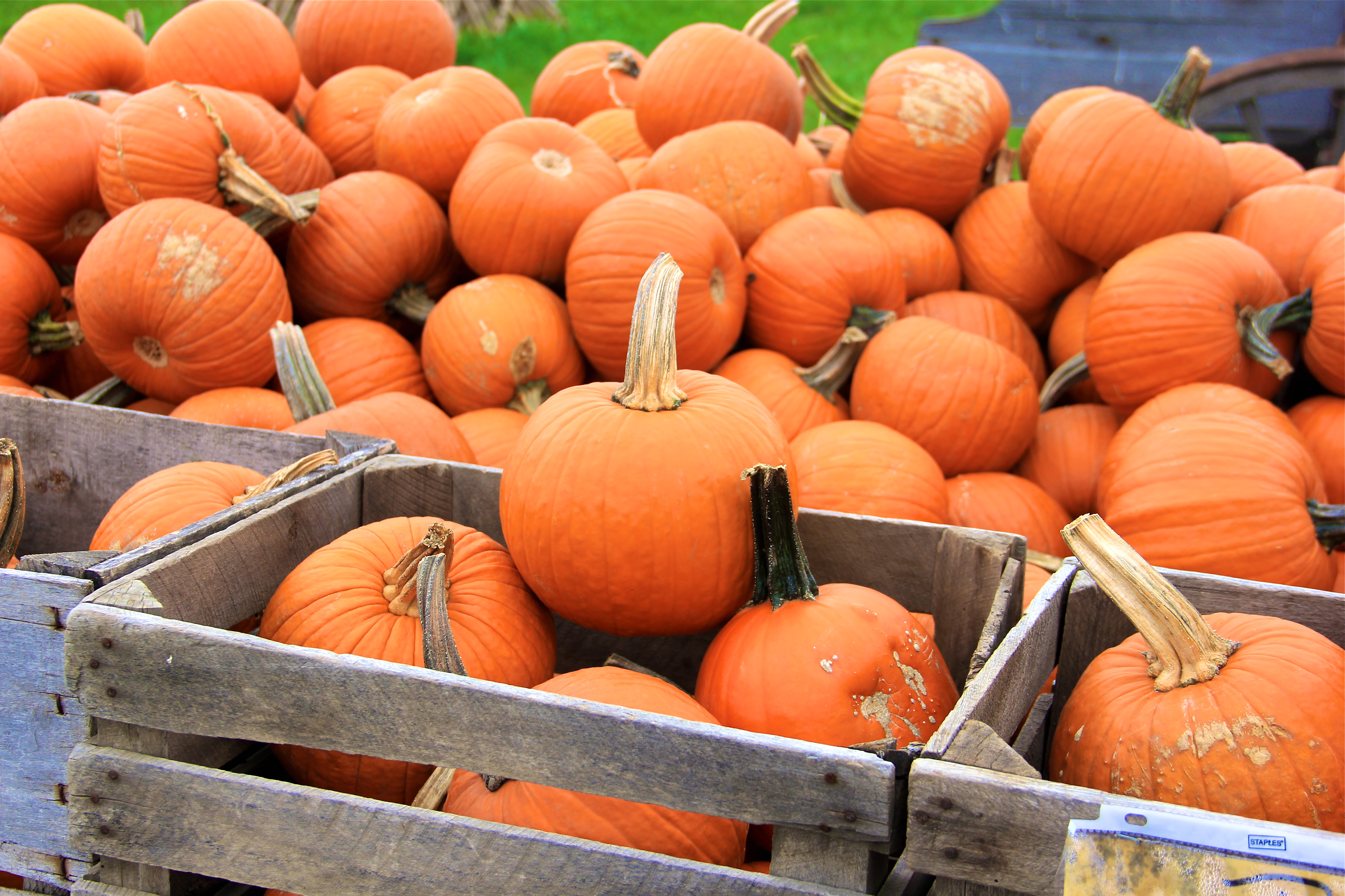 Renick's Pumpkin Patch | girl about columbus