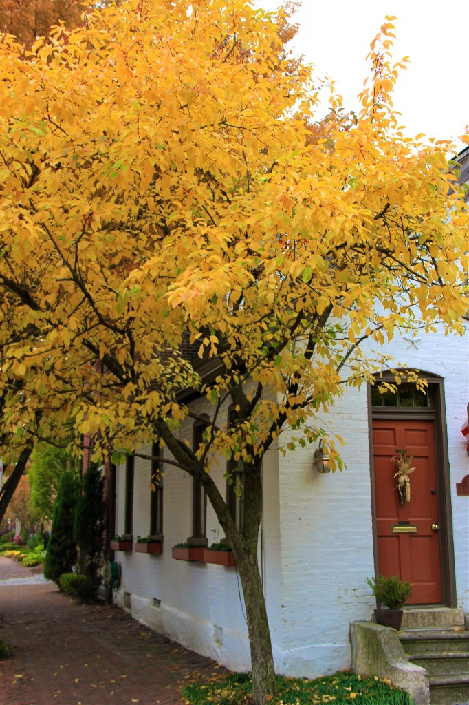 German Village Fall | girl about columbus