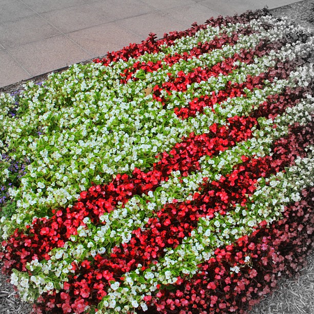 american_flag_flowers_columbus_ohio_statehouse