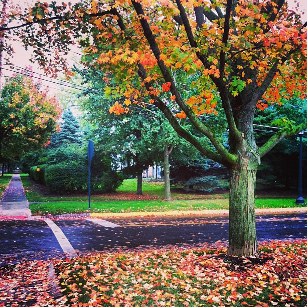 fall_leaves_bexley_ohio_columbus