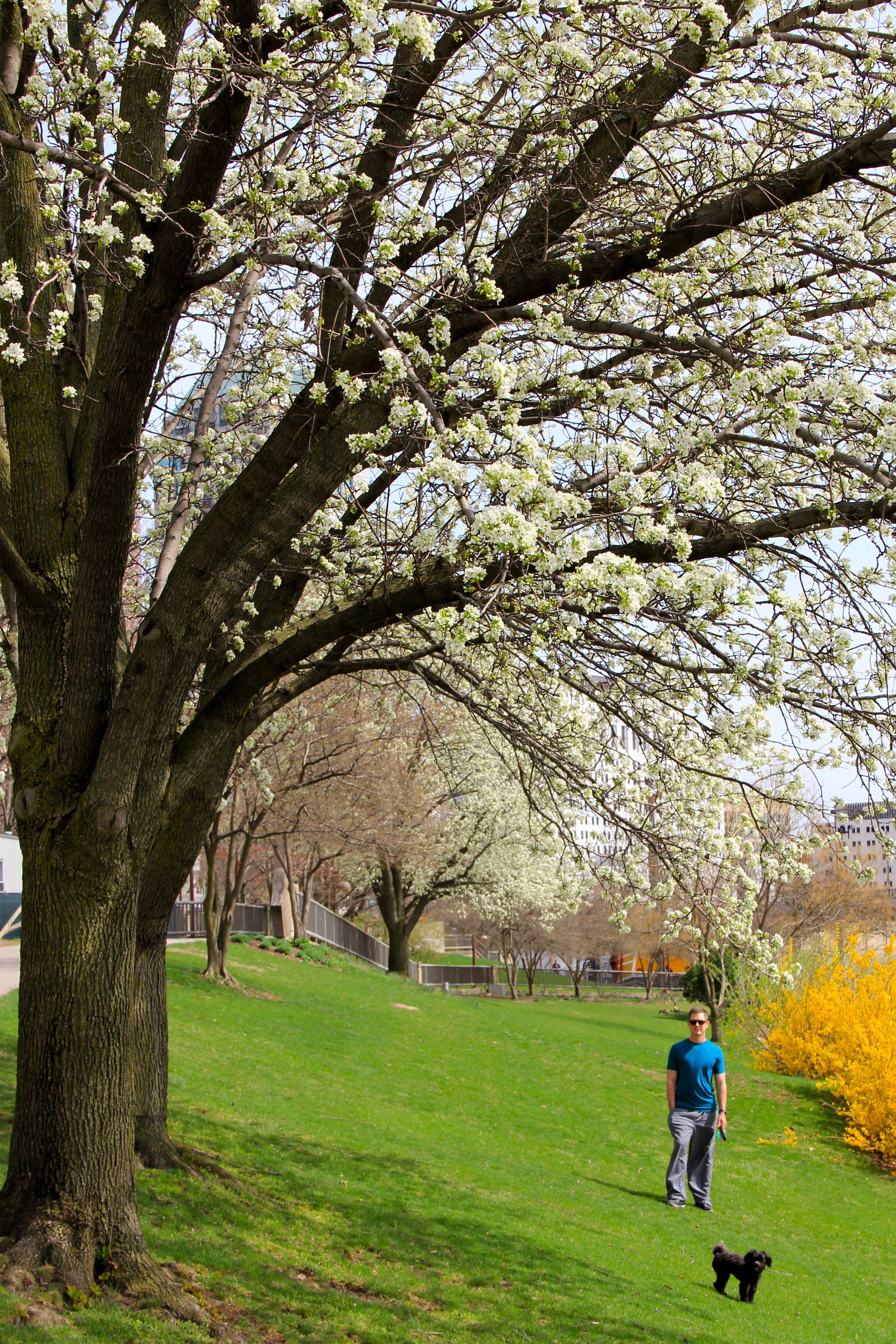 spring in columbus | girl about columbus