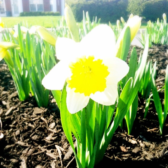 Signs of Spring | girl about columbus