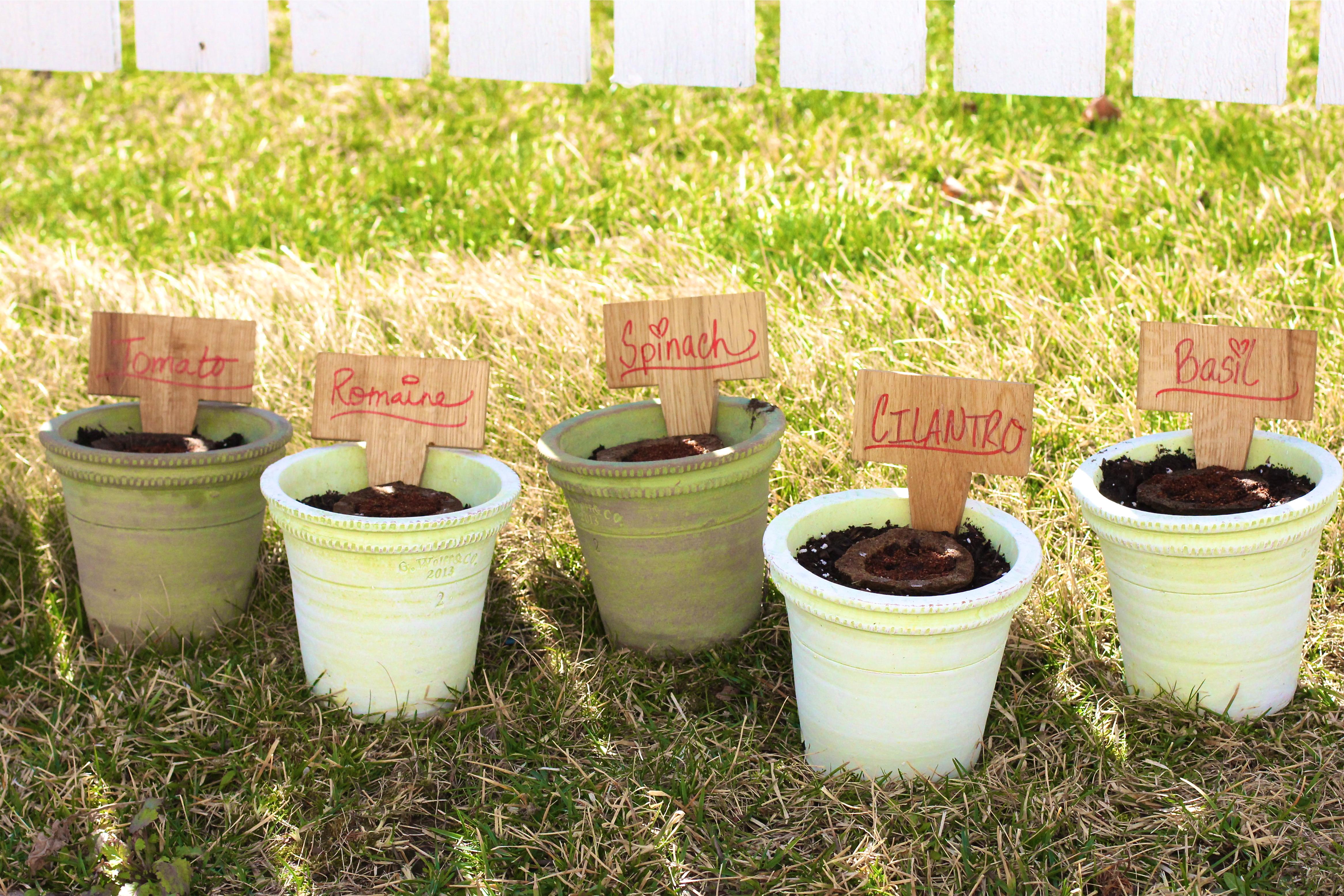 miracle-gro-gro-ables-garden