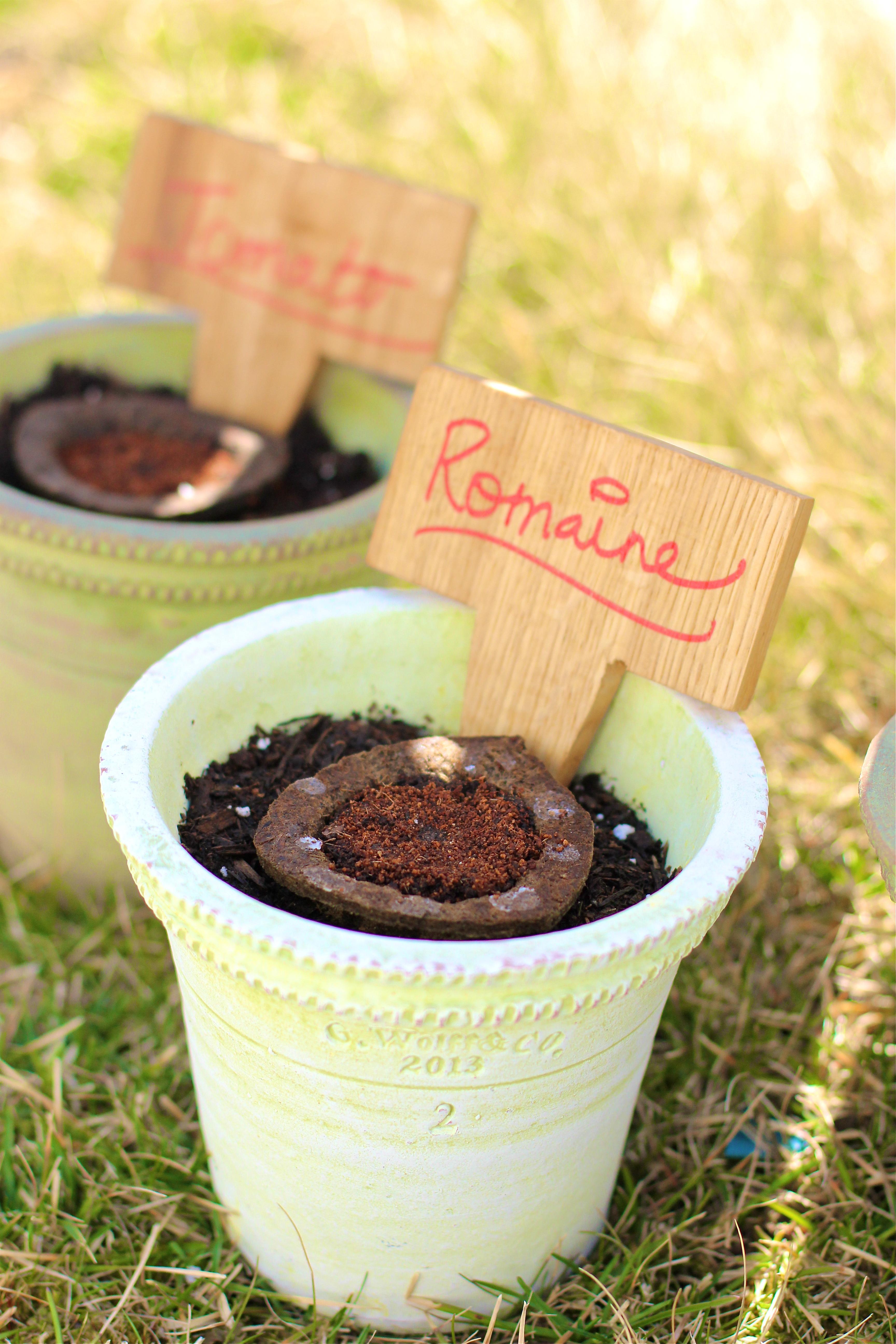romaine-miracle-gro-gro-ables-garden