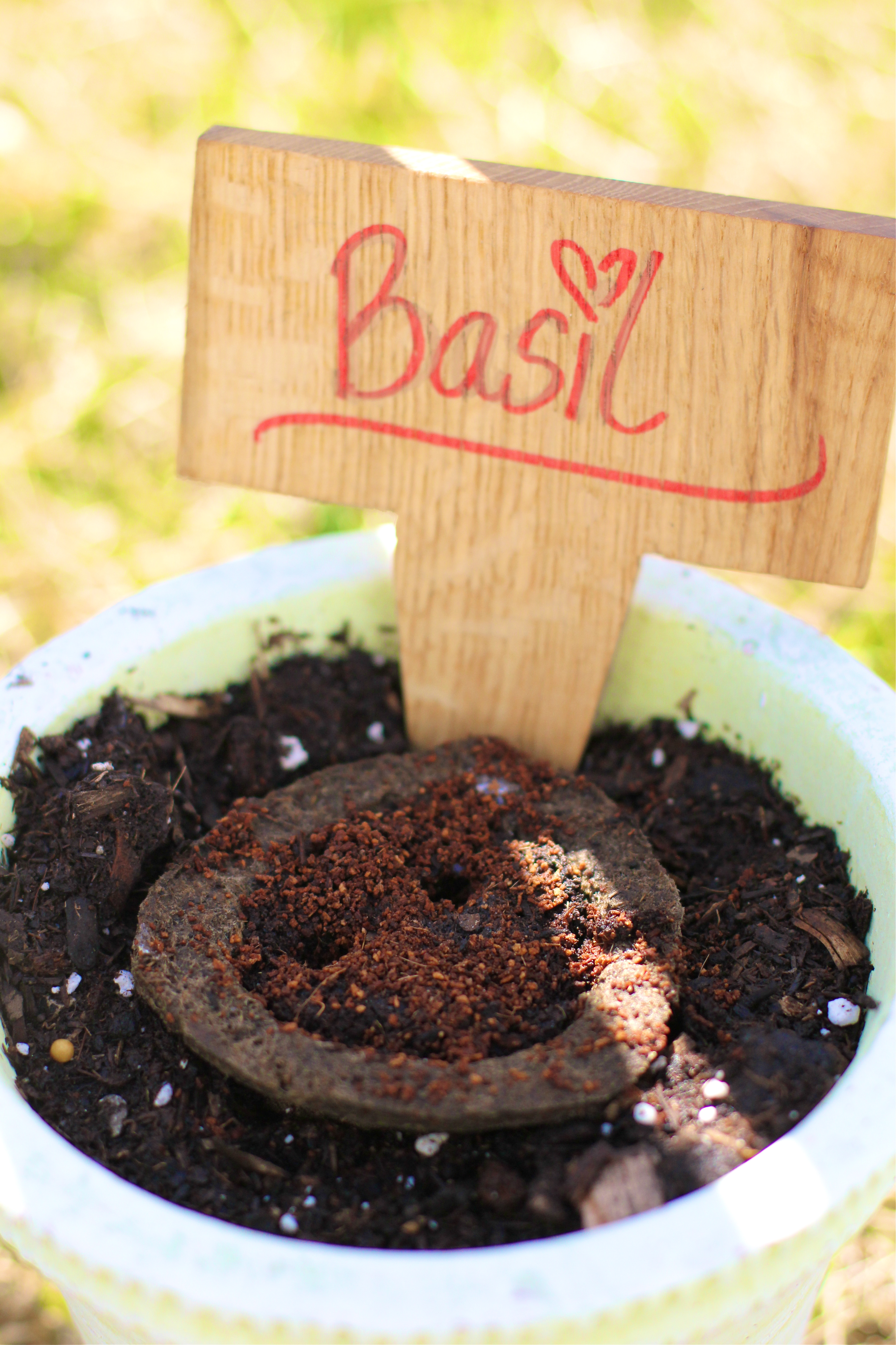 basil-miracle-gro-gro-ables-garden