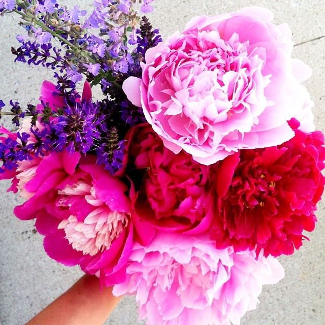 the prettiest peonies ever