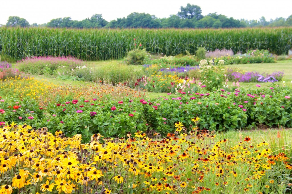 Ohio U-Pick Flower Farm
