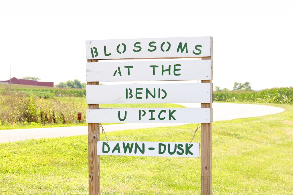U-Pick Flower Farm | Williamsport, Ohio