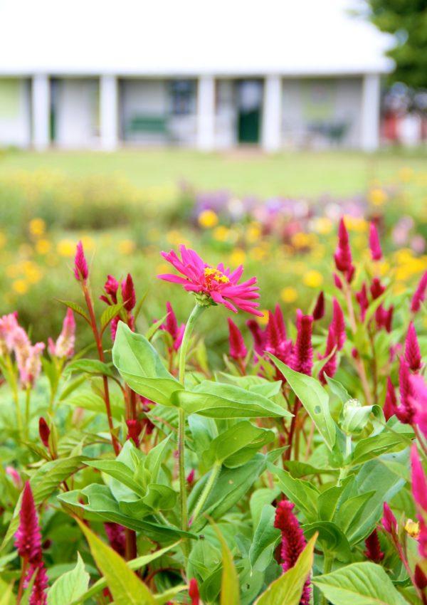 U-Pick-Ohio-Flower-Farm
