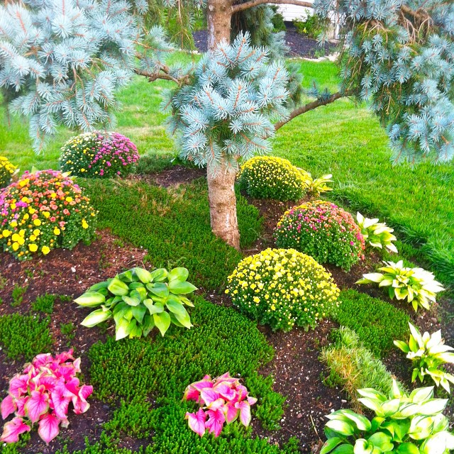 mums-landscaping-grove-city-ohio