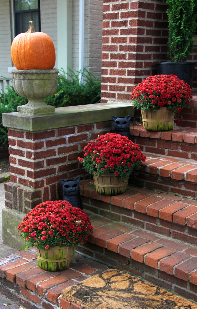 red_mums_on_front_steps_fall