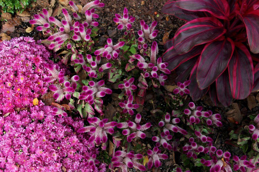 german_village_columbus_ohio_fall_flowers