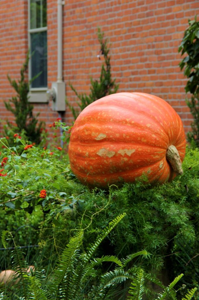 german_village_columbus_ohio_fall_large_pumpkin