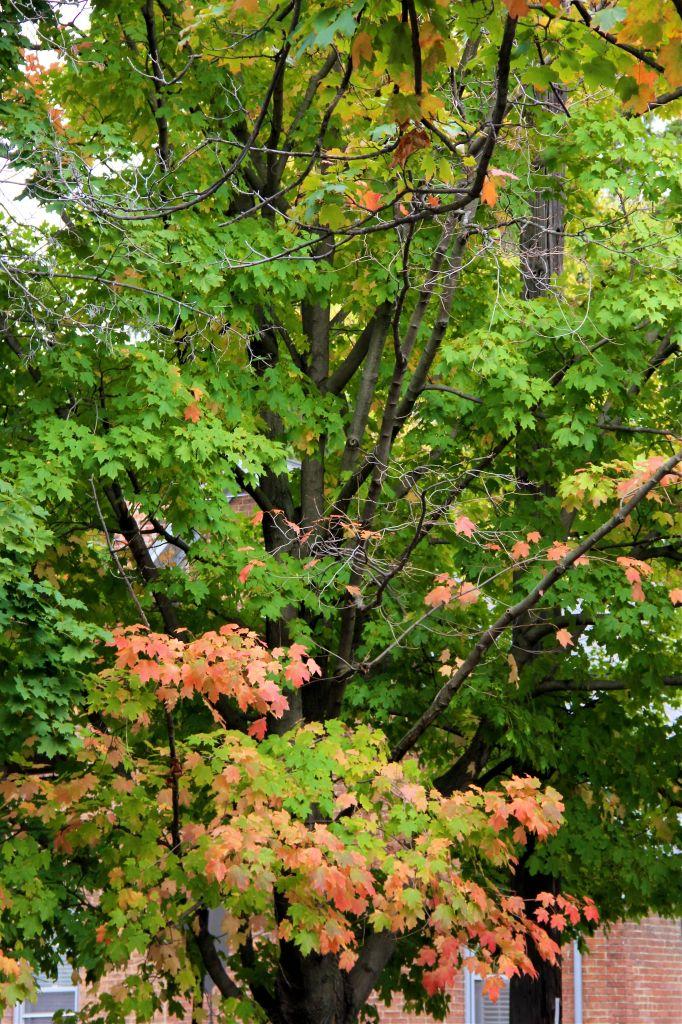 fall_foilage_columbus_ohio