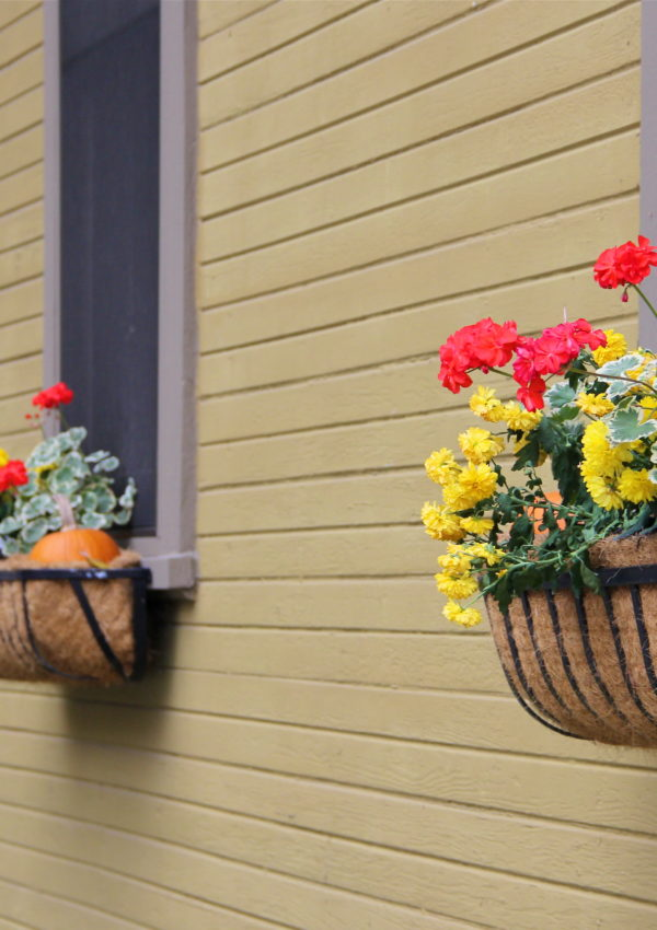 fall_flowers_window_boxes