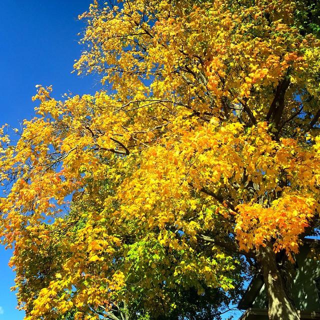 fall-color-columbus-ohio