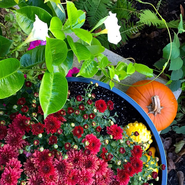 fall-front-porch-decor-mums-pumpkin