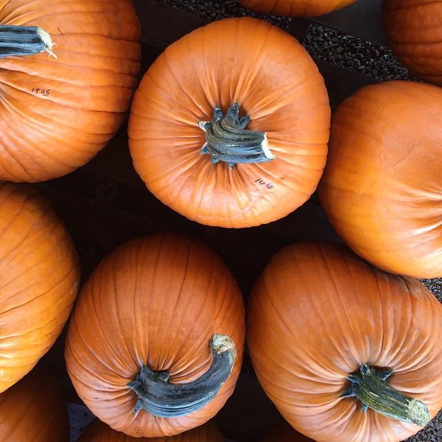 renicks-pumpkin-patch