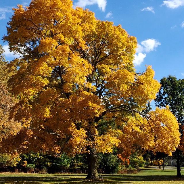 yellow-fall-foilage-lancaster-ohio