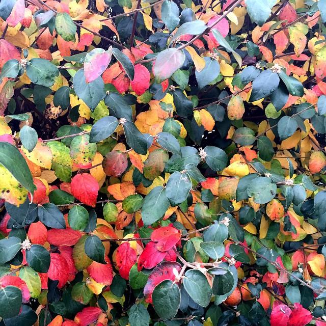 fall-foilage