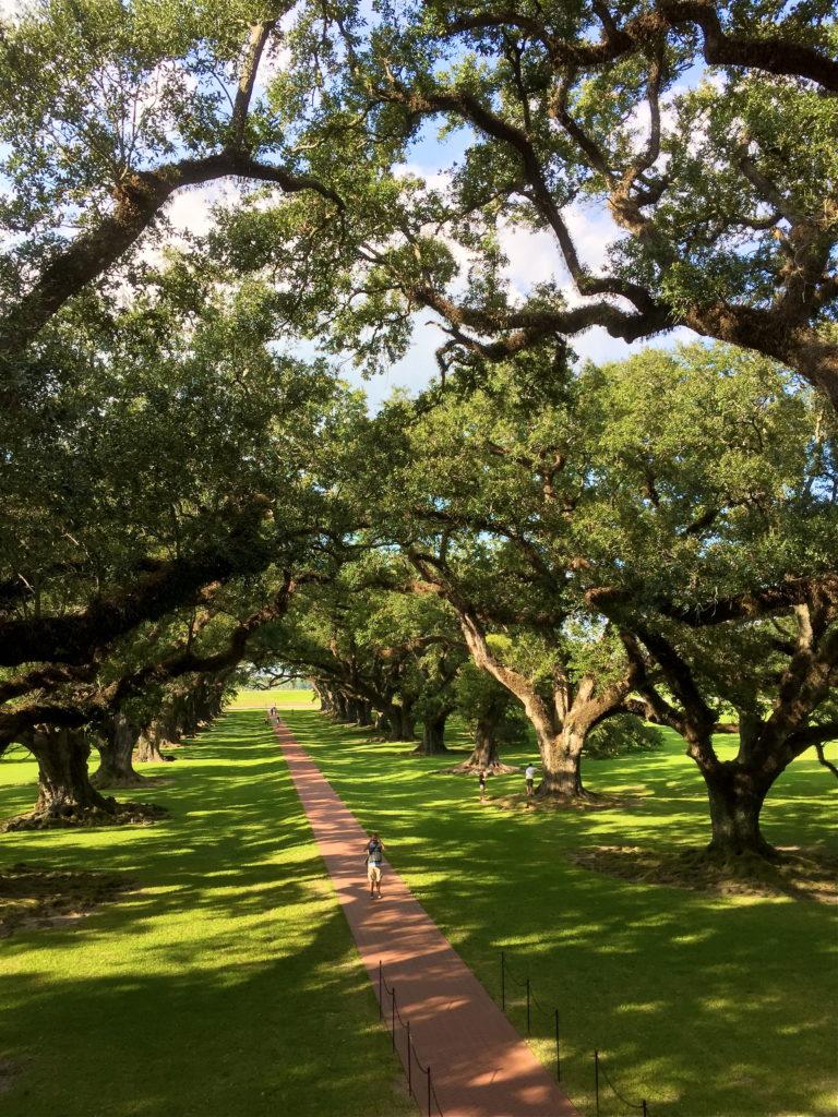 historical-southern-plantation
