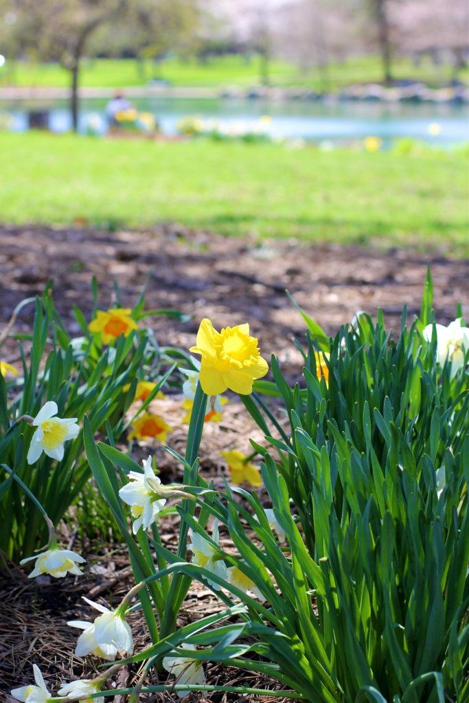 spring-at-goodale-park-columbus-ohio