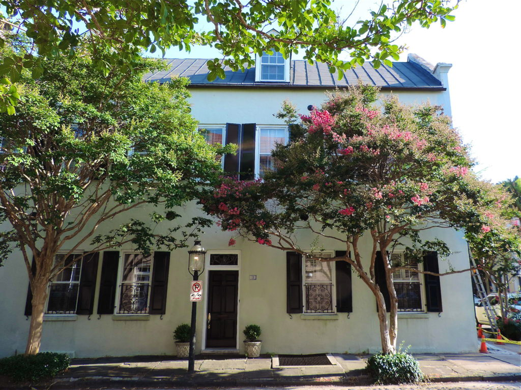 crepe-myrtle-charleston-south-carolina