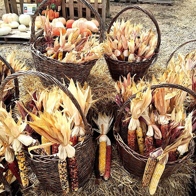 fall-corn-husks
