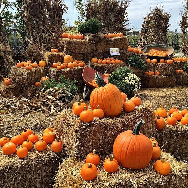 pumpkins-and-straw
