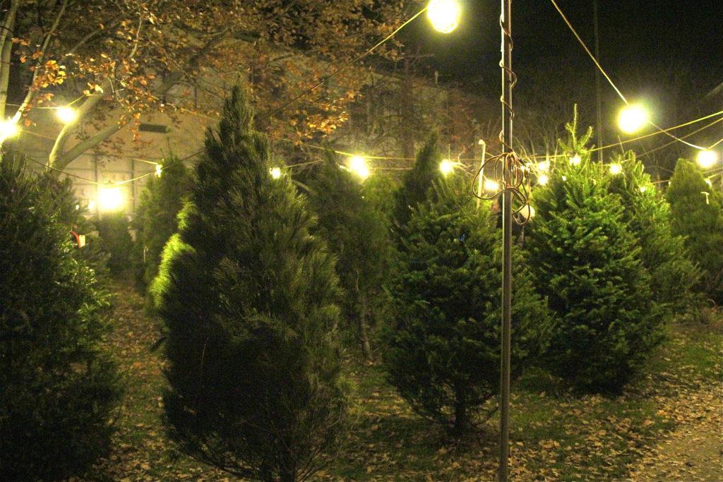 Christmas Trees in German Village