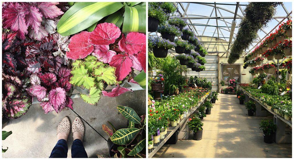 straders-garden-nursery