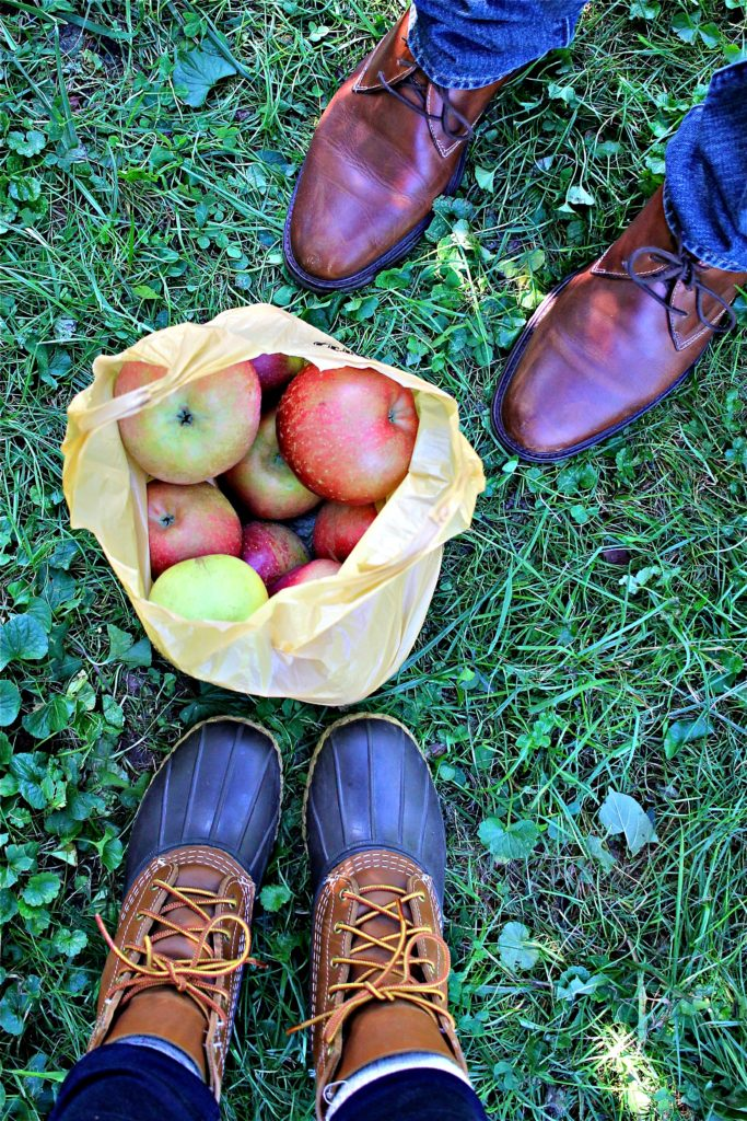 apple-picking-at-lynd-fruit-farm
