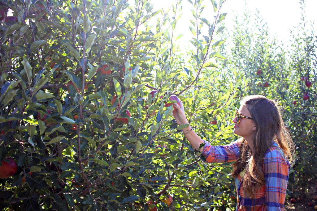 tis-the-season-for-apple-picking