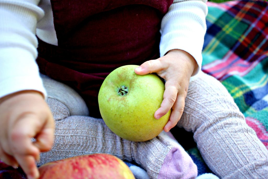 apple-picking-in-the-fall