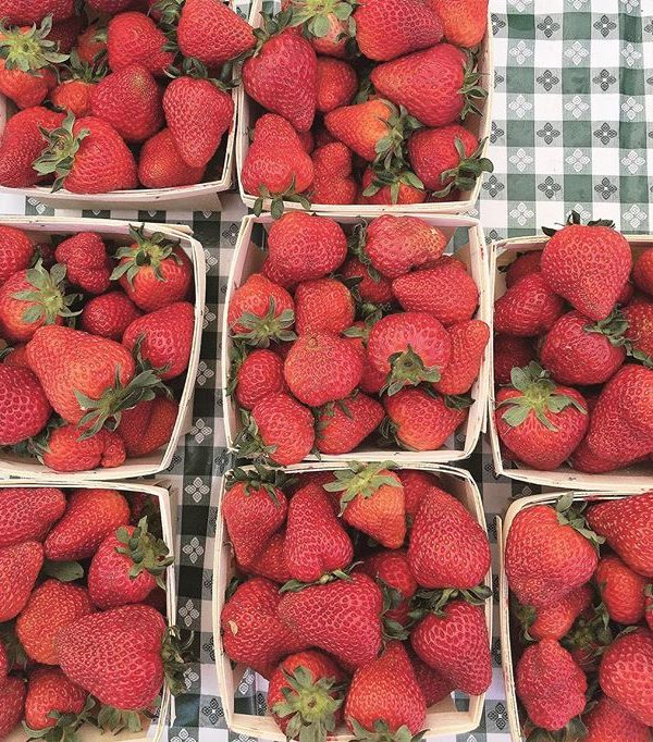 rhoads farms strawberries