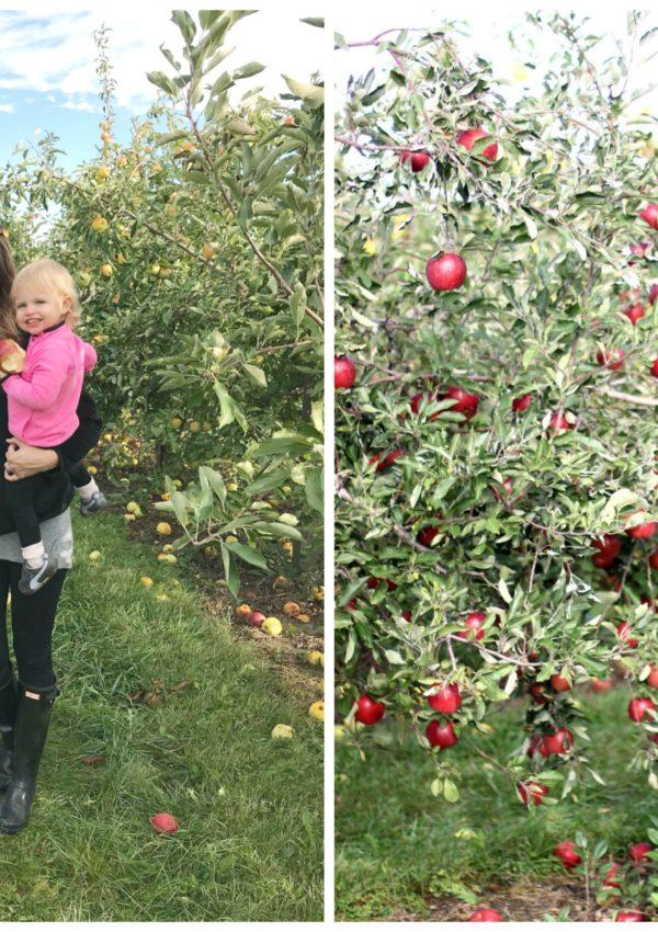 apple picking // girl about columbus