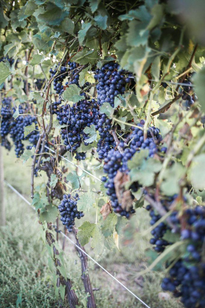 ohio-wine-country